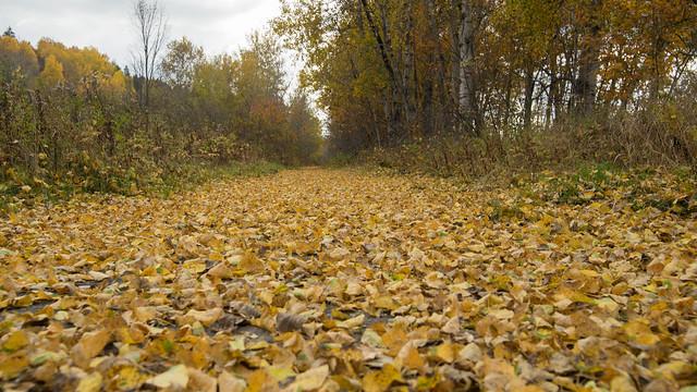 Sentier, Feuilles d'automne, Beauce, PQ, Canada - 07942