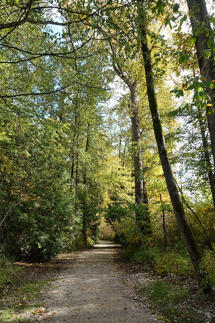 Autumn walk in Foreshore Park