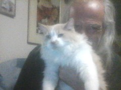 LOST senior dlh white/orange cat in #forestlawn. Msg Trevor if seen/ found. Pls rt, share, watch, help to find MUGG MUGG! This old guy went missing early Saturday morning. We live in Forest Lawn south of 17th Ave, close to 44th Street. He loves to be outd