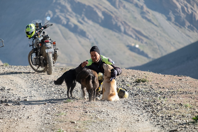 Paul with the friendly town dogs of Mudh village. Pin Valley, Himachal Pradesh, India. 2019.