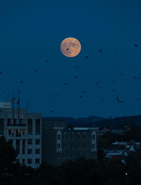 Moonrise Over Washington (NHQ202110190009)