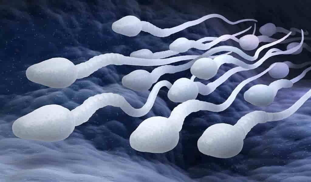 Une nouvelle percée dans le traitement de l'infertilité masculine