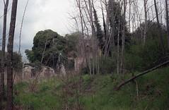 Ruderi nel bosco