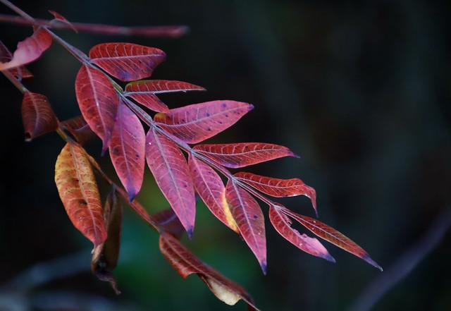 autumn's red