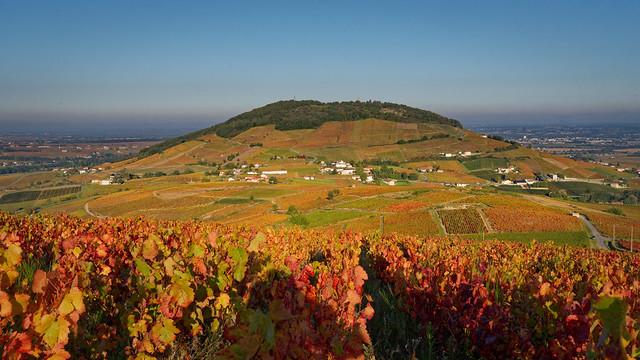 Les vignes du Mont Brouilly en version automnale