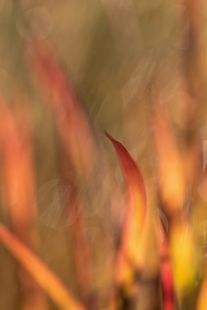 Flames of Grass