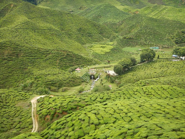 Teeplantage Malaysia