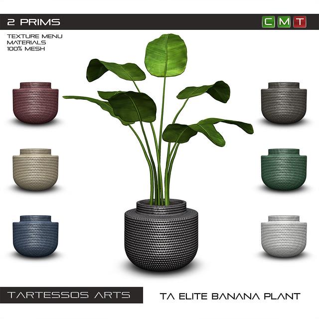 TA Elite Banana Plant