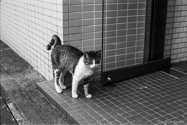 Hooked-Tail Cat