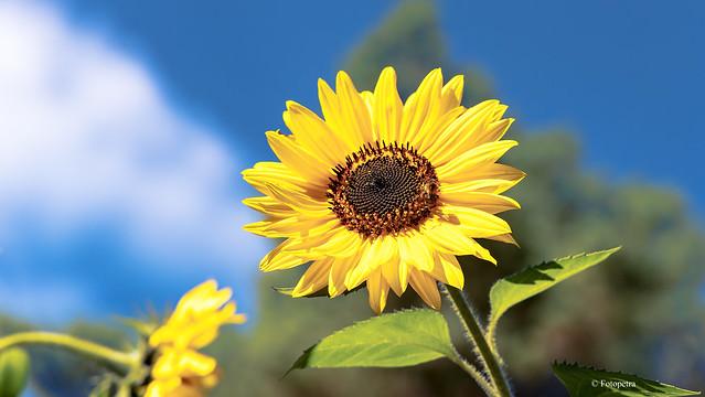 Heute brauche ein bisschen Sonne....