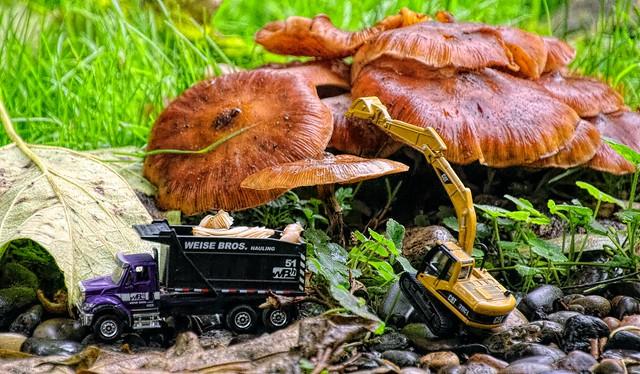 Mushroon Harvest Time
