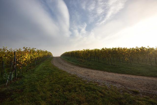 Le chemin des vignes