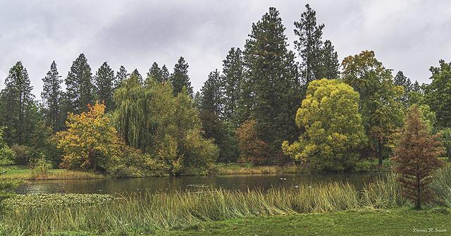 Cannon Hill Park in the Autumn Rain