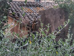 u00c0ngel del portal del jardu00ed de l'u00c0ngel, Girona.
