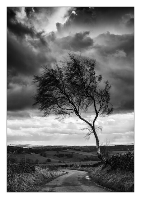 Shaped by the Wind (3) B&W 8079