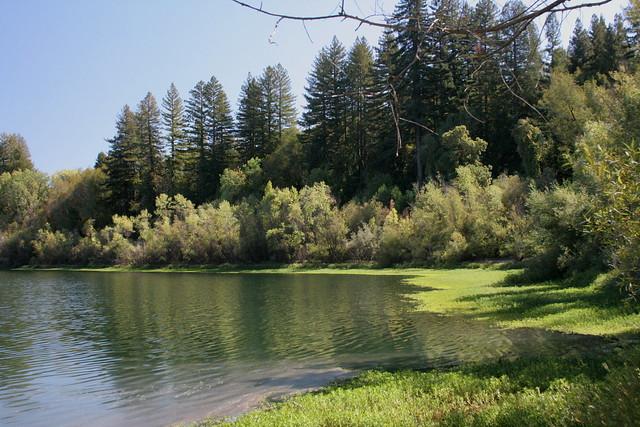 Shoreline with Sequoias