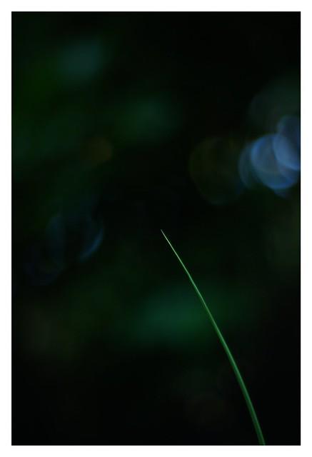 SONY ILCE‑7M2 / Lomography New Jupiter 3+ 1.5/50 L39/M