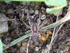 Welche Spinne?