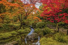 Seattle Japanese Garden in Autumn