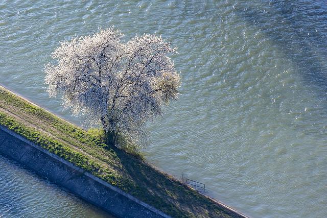 Single Tree - 15