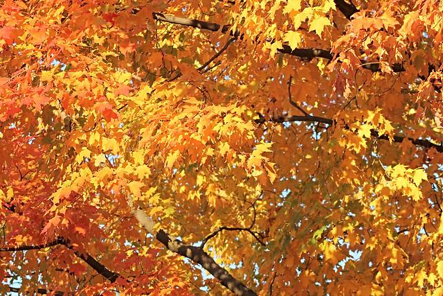 Sunlight Tree - Colour & Light