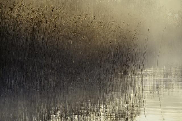 Black Lake Bird