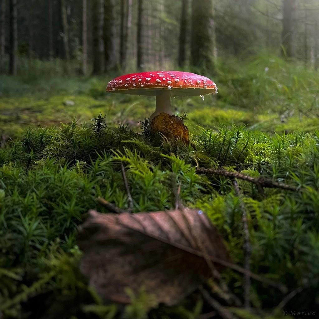 Nature's Little Wonder