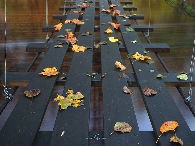 Crossing to Autumn
