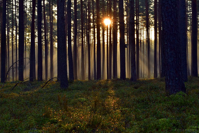Misty Morning Sunshine in a forest
