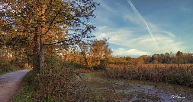 An Autumn Walk along the Beaver Marsh
