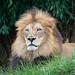 """<p><a href=""""https://www.flickr.com/people/djjamphoto/"""">joemastrullo</a> posted a photo:</p>  <p><a href=""""https://www.flickr.com/photos/djjamphoto/51615490701/"""" title=""""Cincinnati Zoo 10-21-21-01770""""><img src=""""https://live.staticflickr.com/65535/51615490701_38a6d2da85_m.jpg"""" width=""""240"""" height=""""160"""" alt=""""Cincinnati Zoo 10-21-21-01770"""" /></a></p>  <p>John - Lion</p>"""