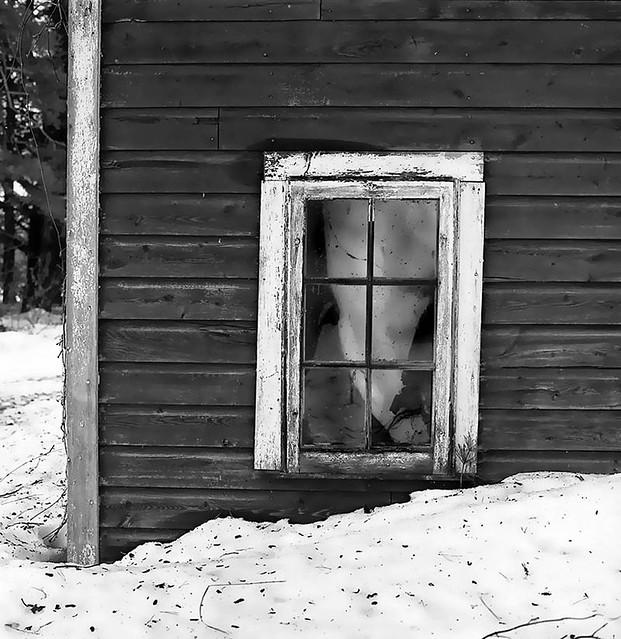 Window-Abandoned Homestead