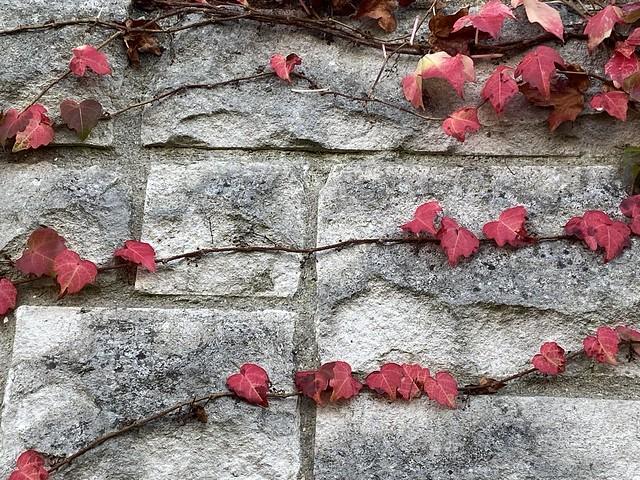 autumn wall (294/365)