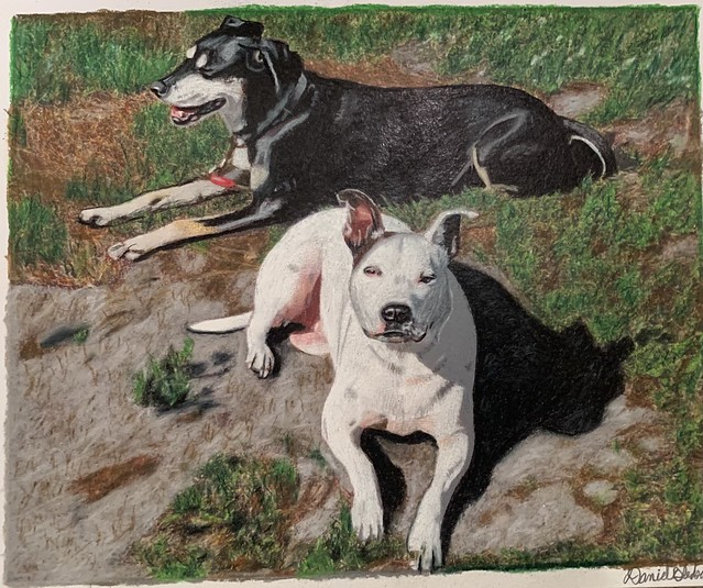 Brooke's Dogs -Prismacolor pencil on Canson paper 🎨👨🎨