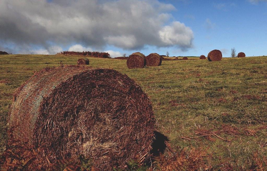 Bracken Bales In The Brecon Beacons