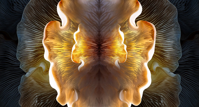 mushroom gill abstraction