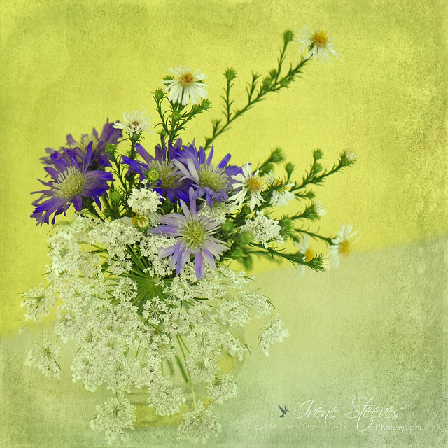 Wild Asters and Queen Anne's Lace Still Life
