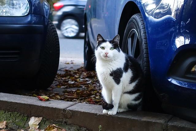 The car dealer