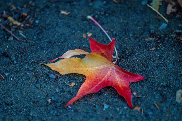 Fallen Leaf-743600.jpg