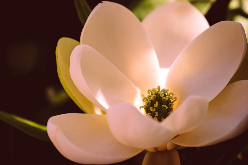 Bellevue Botanical Garden 2020_06_17-8