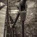 Suspension bridge cable