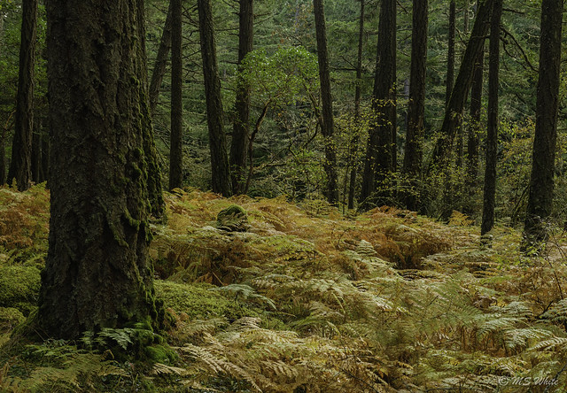 Autumn calling…Treemendous!