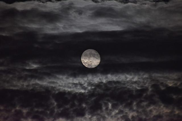 Hunter Moon Hiding