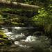Little Zigzag Creek, July 2021