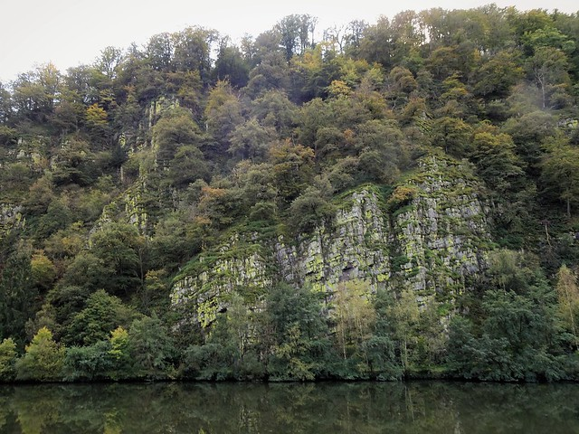 Nature along the banks of the Saar
