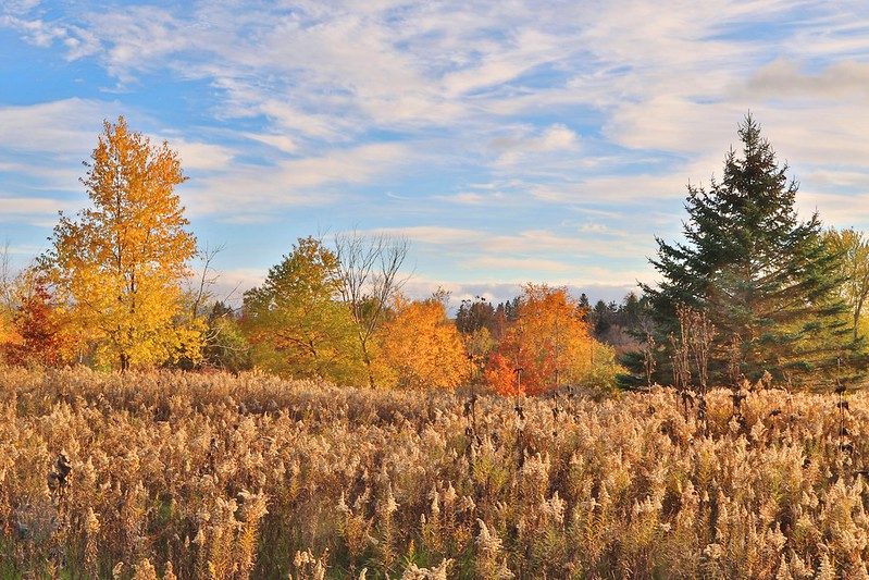 fall color at Lake Meyer Park IA 653A8218