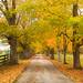 Autumn Entrance