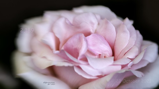 Smell the roses #22/10