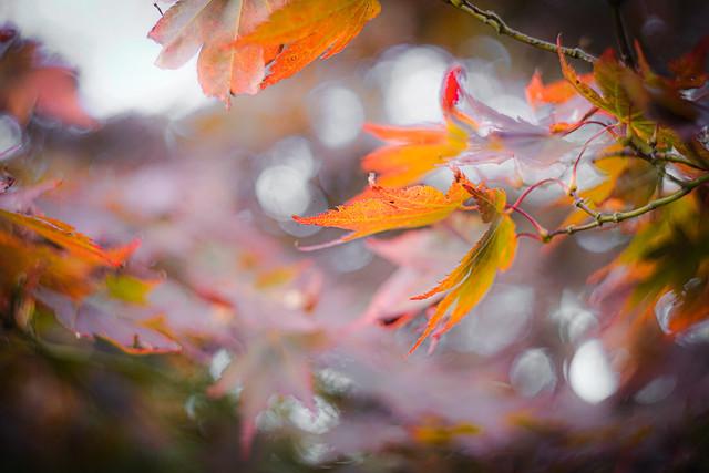 More dancing leaves!