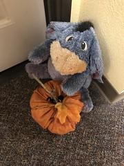 Egor,pumpkin